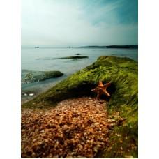 Seaweed Absolute