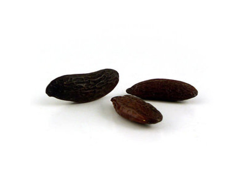 Tonka Bean Absolute