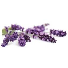 Lavender Comparative Pack