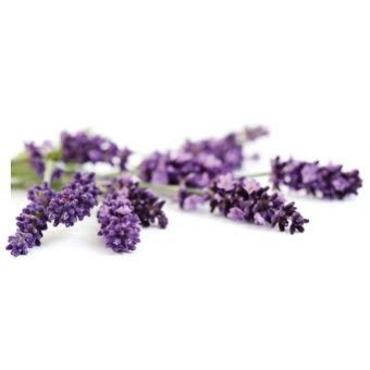 Lavender Comparative Pack