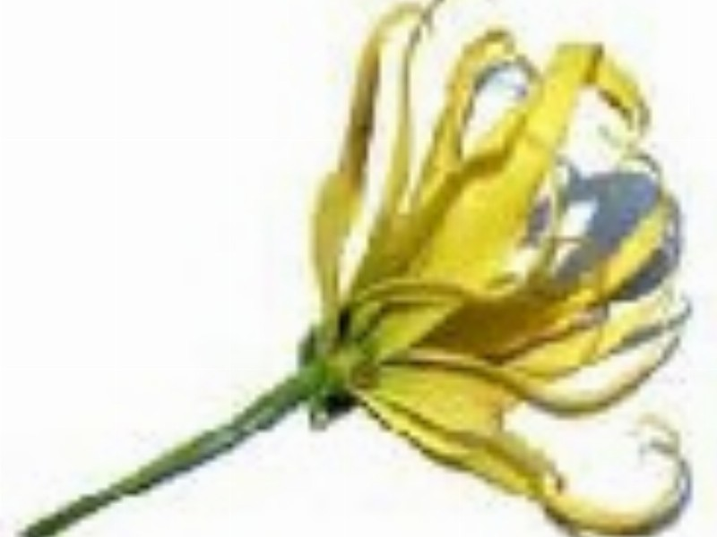 Essential Oils as Anti-Biotics