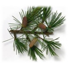 Cedarwood Essential Oil (Cedrus atlantica)