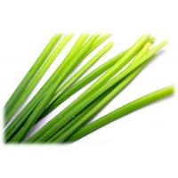 Citronella Essential Oil  (Cymbopogon nardus L.)