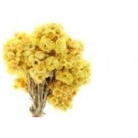 Helichrysum Essential Oil (Helichrysum italicum)