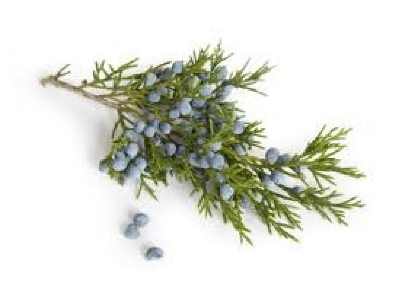Juniper Berry Essential Oil (Juniperus communis)