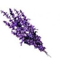 Lavender Alpine Essential Oil (Lavandula angustifolia)