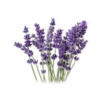 Lavender Spike Essential Oil (Lavandula latifolia)