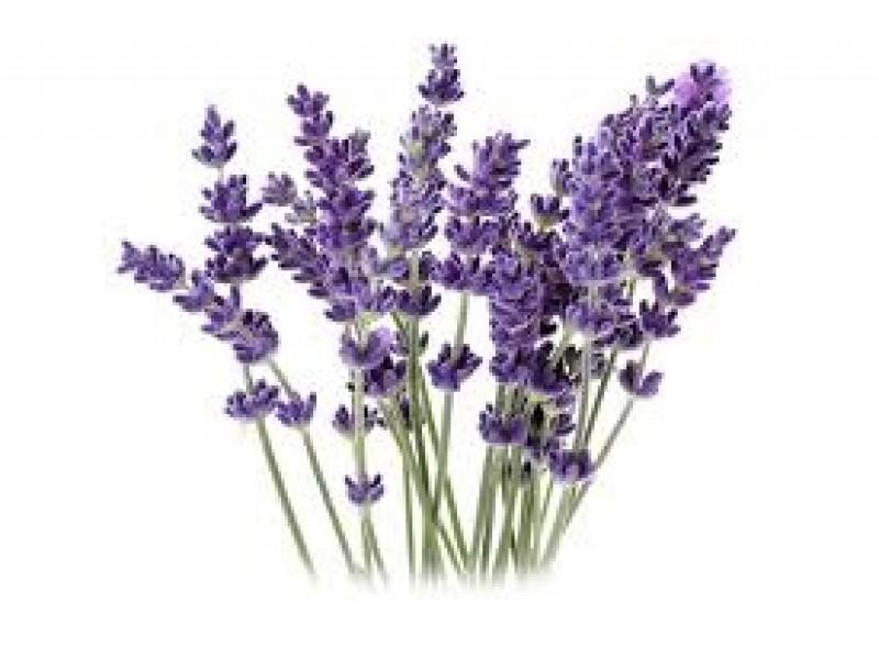 Lavender Spike Essential Oil (Lavandula latifolia)