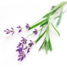 Lavender Stoechas Essential Oil (Lavandula stoechas)