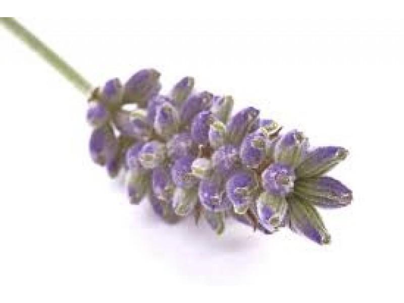 Lavendin Abrial Essential Oil (Lavandula burnati)