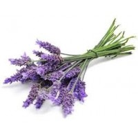 Lavendin Super Essential Oil (Lavandula burnati)