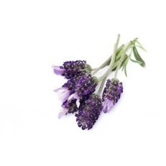 Lavendin Grosso Essential Oil (Lavandula burnati)