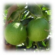 Mandarin Green Essential Oil (Citrus reticulata)
