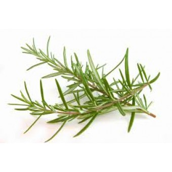 Rosemary, Verbenone Essential Oil (Rosmarinus officinalis)