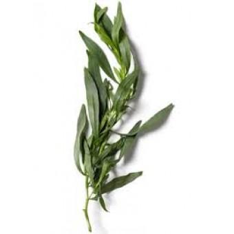 Tarragon Essential Oil (Artemisia dracunculus)