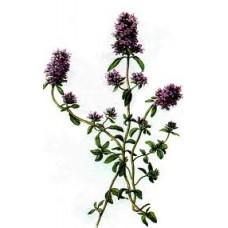 Thyme Wild Essential Oil (Thymus serpyllum)