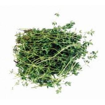 Thyme Thujanol CT Essential Oil (Thymus vulgaris)