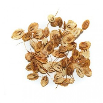Angelica Seed Essential Oil (Angelica archangelica L)