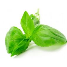 Basil (Large Leaf) Essential Oil  (Ocimum basilicum)