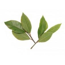 Bay Essential Oil (Pimenta racemosa)
