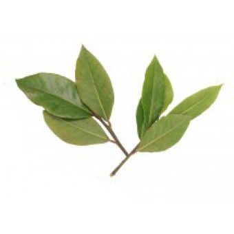 Bay (West Indian) Essential Oil (Pimenta racemosa)