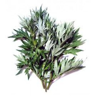 Mugwort, Great Essential Oil (Artemisia arborescens)
