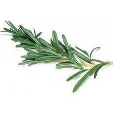 Rosemary Essential Oil (Rosmarinus officinalis 1,8 Cineole