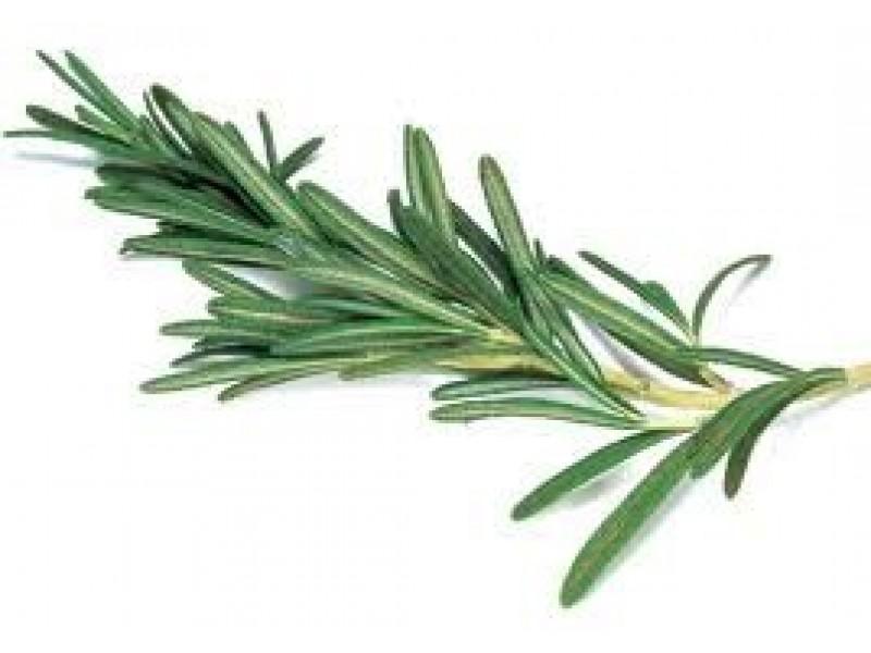 Rosemary, 1.8 Cineole Essential Oil (Rosmarinus officinalis)