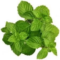 Mint-Spearmint Essential Oil (Mentha viridis)