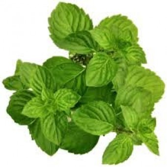 Mint-Spearmint Essential Oil (Mentha viridis)