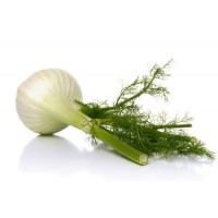 Fennel Sweet Essential Oil (Foeniculum vulgare var.dulce)