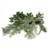 Fir, Silver Essential Oil (Abies alba)