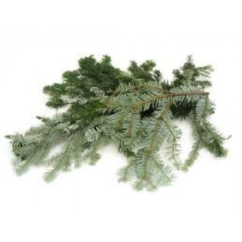 Fir, Silver Essential Oil (Abies alba)