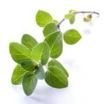 Marjoram, Sweet Essential Oil (Origanum majorana)