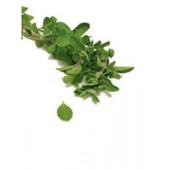 Marjoram, Spanish Essential Oil (Thymus mastichina)