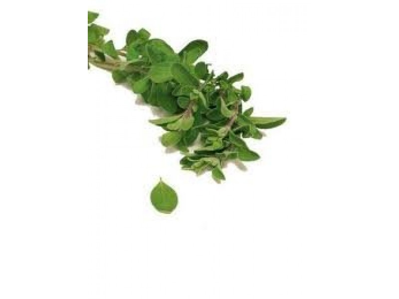 Marjoram Spanish Essential Oil (Thymus mastichina)