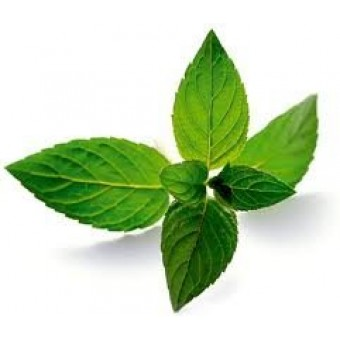 Mint-Peppermint Essential Oil (Mentha piperita v.piperita)