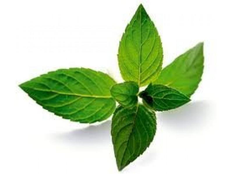 Mint-Peppermint Essential Oil (Mentha piperita v.piperita)