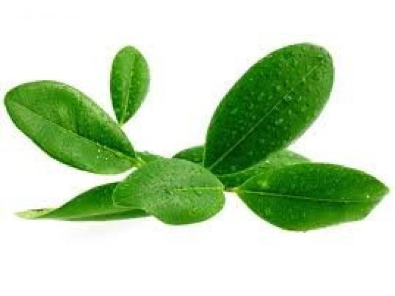 Ravensara Essential Oil (Ravensara aromatica)
