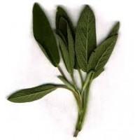 Sage Essential Oil (Salvia officinalis)