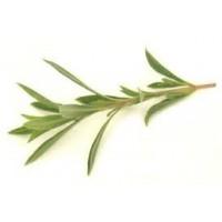 Savory Winter Essential Oil (Satureia montana)