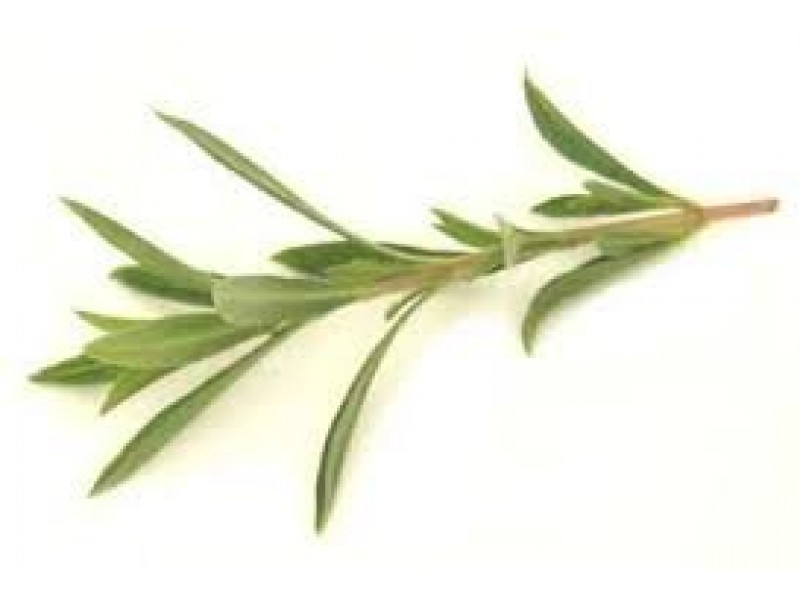 Savory Winter Essential Oil (Satureia montana)