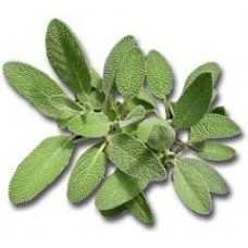 Sage Spanish Essential Oil (Salvia lavandulifolia)