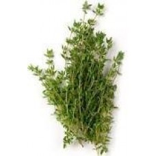 Thyme Borneol Essential Oil (Thymus satureioides)