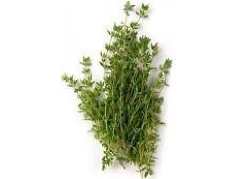 Thyme Borneol Essential Oil (Thymus satureioides)