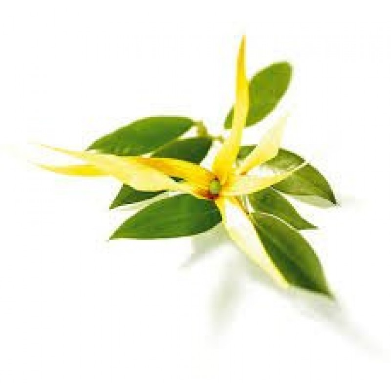 Ylang Ylang Extra Essential Oil 10ml