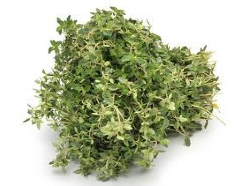 Thyme Thymol CT Essential Oil (Thymus vulgaris)