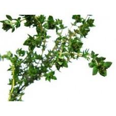 Thyme Geraniol CT Essential Oil (Thymus vulgaris)