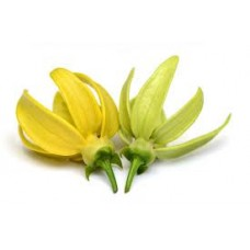 Ylang Ylang, Complete Essential Oil  (Cananga odorata)