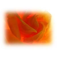 Rose Damascena 2 Hydrolat, Organic